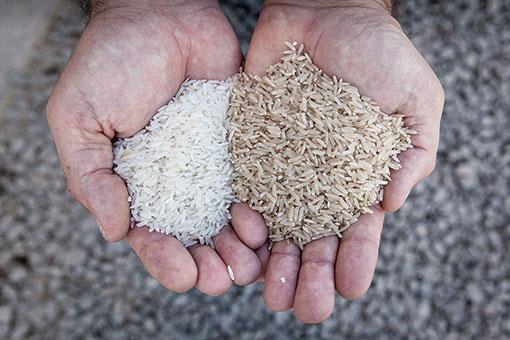 Oriolo, Mayoral y el arroz