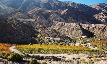 Intensos vinos del norte argentino