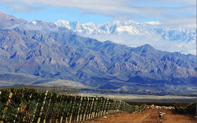 Nueva cosecha para los Finca de Bodega Zuccardi Valle de Uco