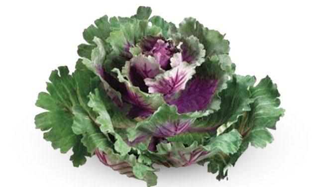 Kale, la onda verde