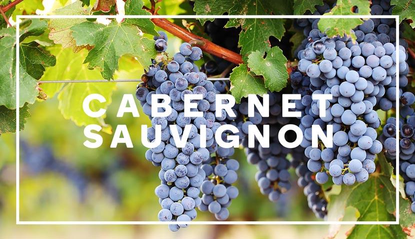 Al Cabernet Sauvignon en su día