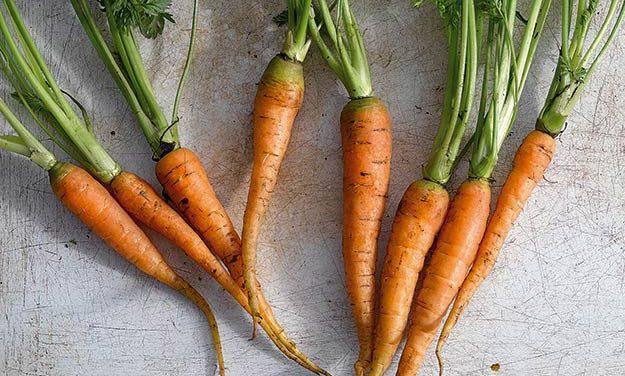Zanahorias  |  Volver a las raíces