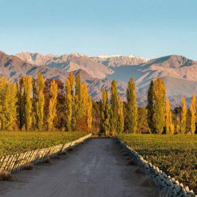 Terrazas de los Andes presentó Malbec Parcel El Espinillo 2017