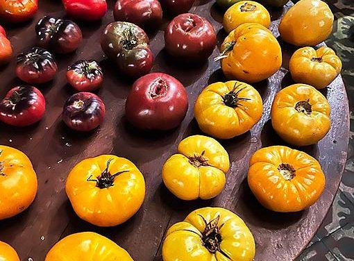 El tomate, de fiesta
