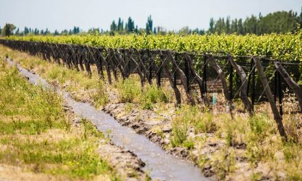 Bodegas Bianchi trabaja por la sustentabilidad