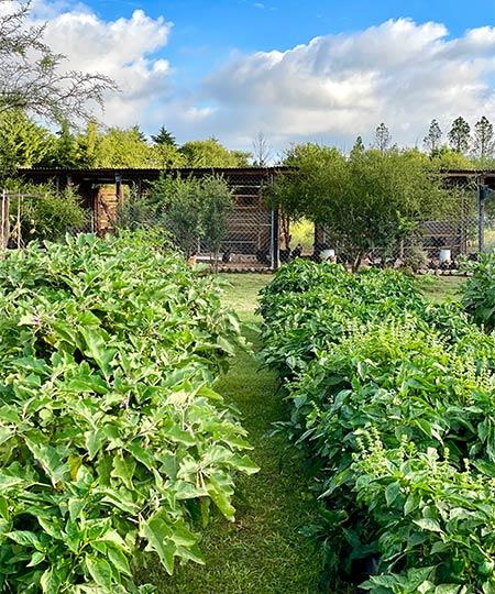 el-campanario-verdura-organica