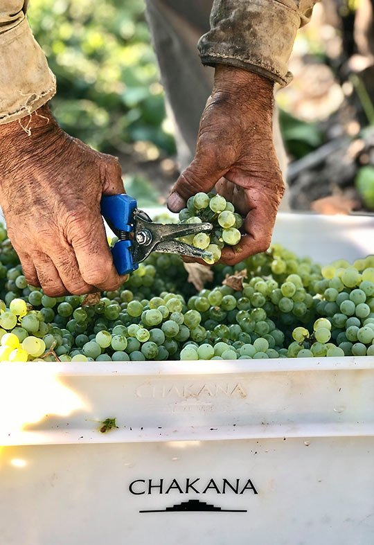 bodega-chakana-uvas
