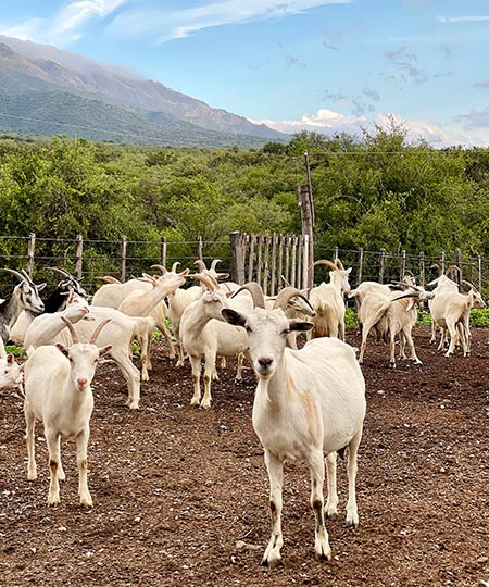 antigua-queseria-nunez-cabras