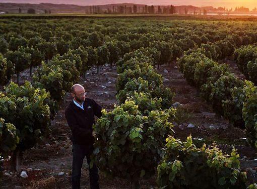 Un nuevo reconocimiento internacional a los vinos de Doña Paula