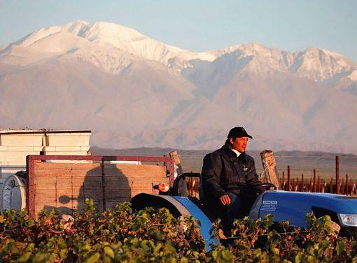 Pulenta Estate: vinos con propósito sustentable