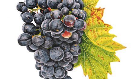 Celebramos al Pinot Noir con 4 recomendaciones