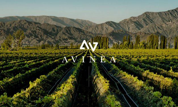 Grupo Avinea, líder en producción de vinos orgánicos argentinos